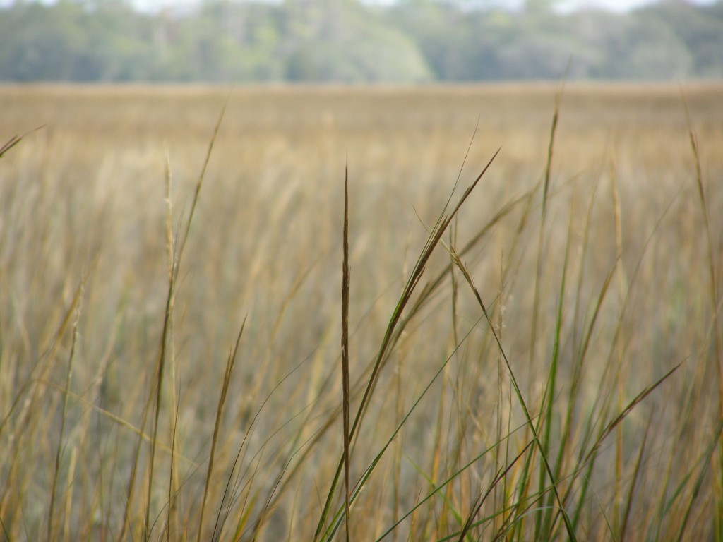 Grasses in the Marsh / Photography by Nicole Rushin